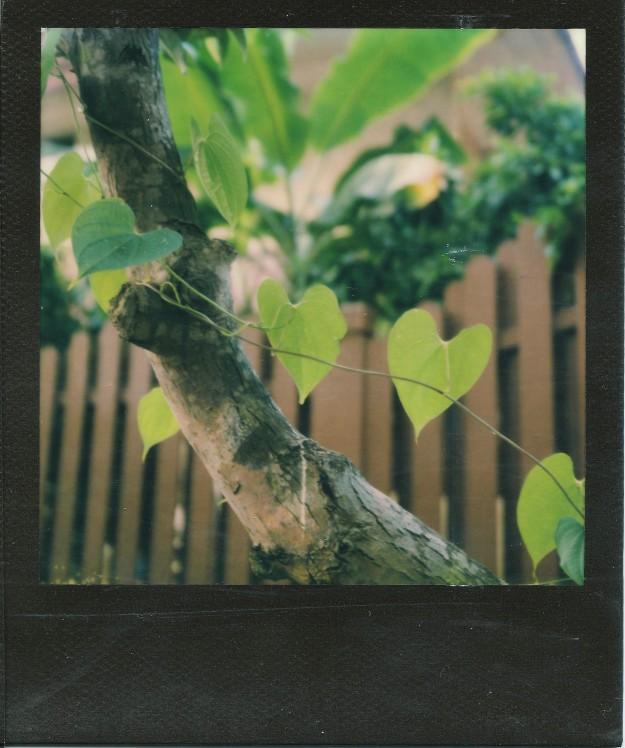 Image (10) (2)