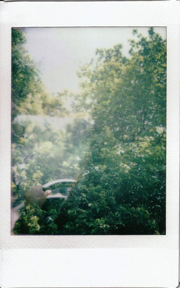 Image (14) - upper peirce (tree branch spoilt)