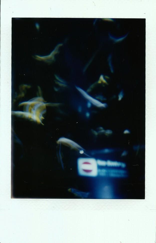 Image (66)b