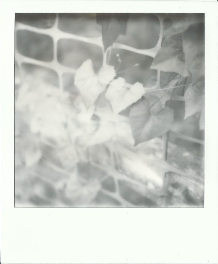 image-33f