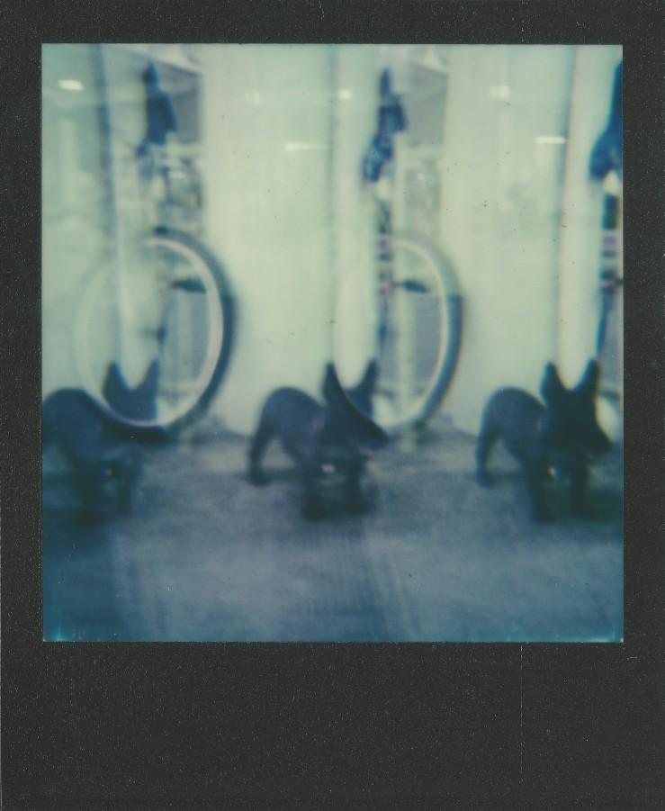 image-45c