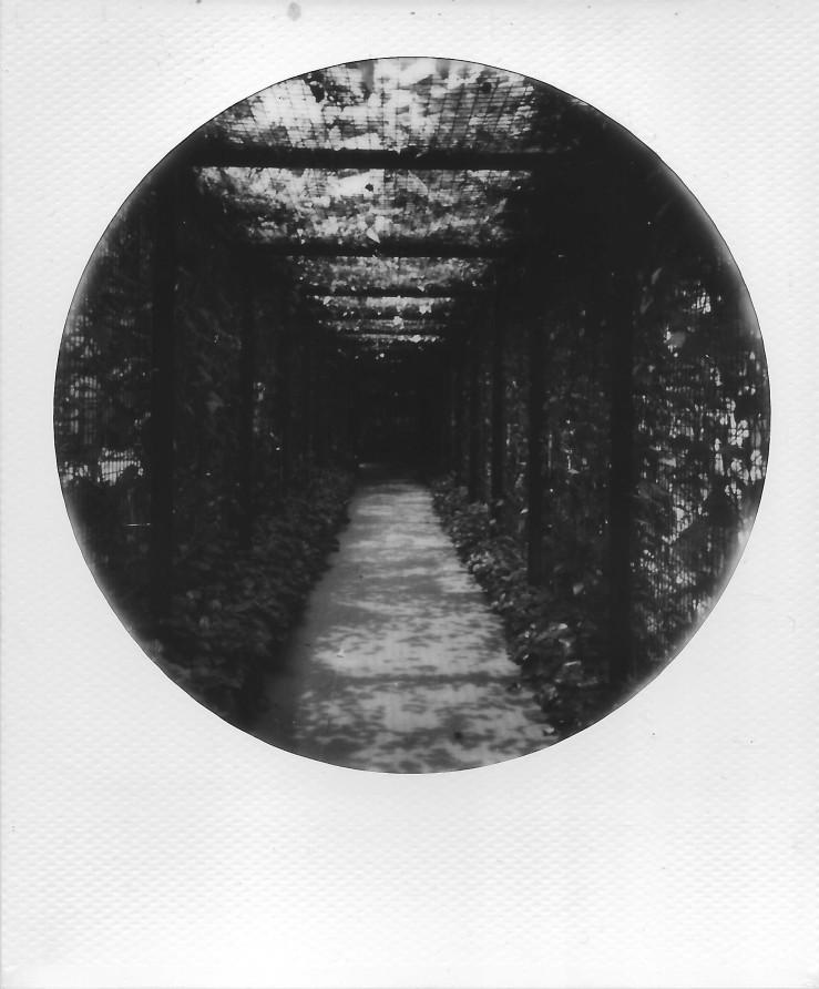 image-2a