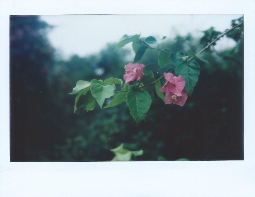 Image (112)a