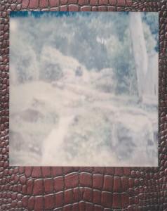 Image (173)b