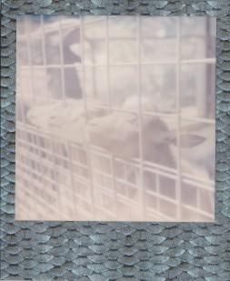 Image (173)d