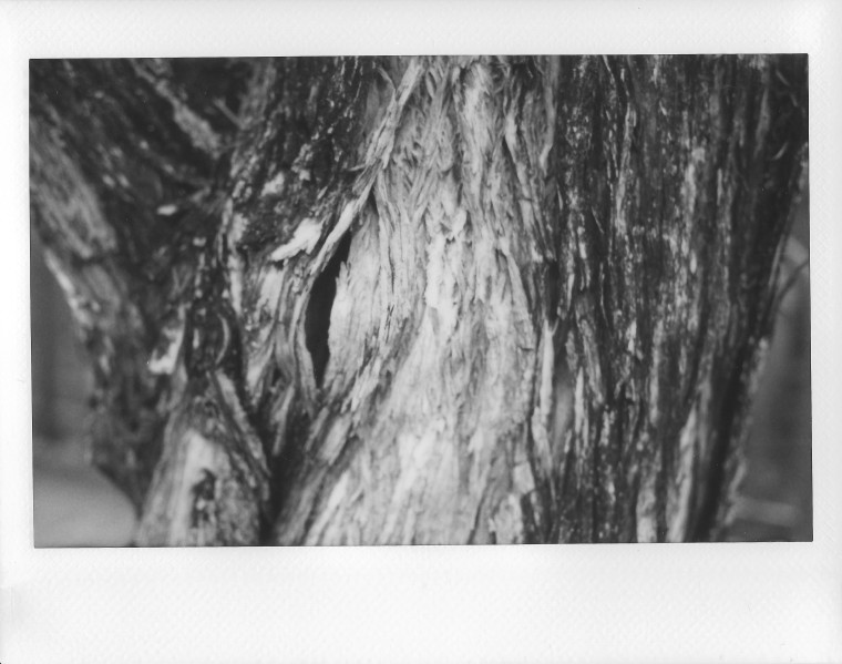 Image (483)b